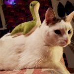 【APEX小ネタ】「このパスファインダーのスキン欲しくない?」「猫にネッシーを乗せてみた」・他