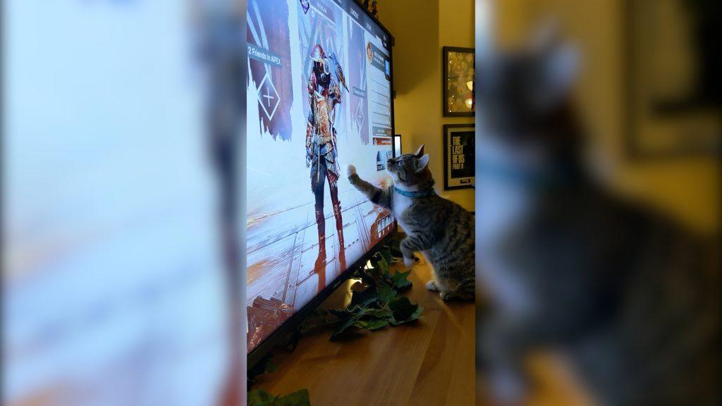 【APEX】ブラッドハウンドのカラスが気になる猫が可愛い